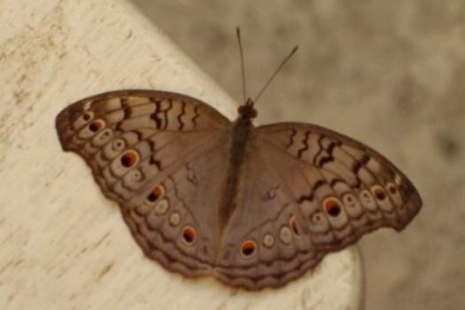 Butterfly Palace & Rainforest Adventure